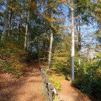 выберите путь, в гору или под гору, влево или вправо :: Heinz Thorns