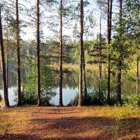 Нежное утро на озере :: dli1953