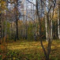 Солнечная полянка в осеннем лесу. :: Пётр Сесекин