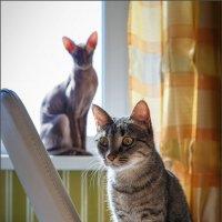 В царстве кошек... :: Сергей Кичигин