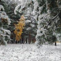 Наша погода и природа пять лет назад, в середине октября :: Николай Белавин