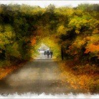 Уходящие в осень :: Светлана marokkanka