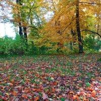 Вот и осень.. :: Антонина Гугаева