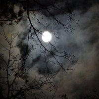 Ночное светило :: Юрий Владимирович 34