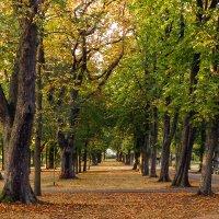 В осеннем парке :: Waldemar F.