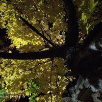 Ночная осень :: Сергей Кондратович