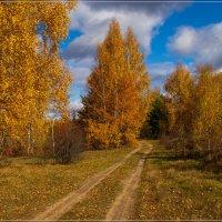 Начало Октября в Подмосковье 12 :: Андрей Дворников