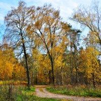 Осенние акварели :: Miola