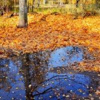 Берега из листьев :: Miola