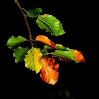 изменение цвета :: Heinz Thorns