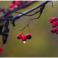 Осень :: А кузнецов