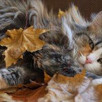Сонливость в листьях :: Наталия Григорьева