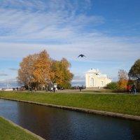 Солнечный день в Петергофе :: Елена