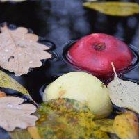 Осень в дачной бочке :: Татьяна