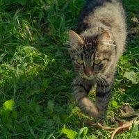 Кошка на прогулке в саду :: Cissa Andebo