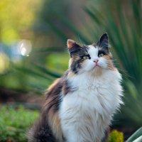 cat_45 :: Trage