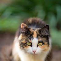 cat_42 :: Trage