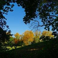 Золотая осень за окном... :: Galina Dzubina