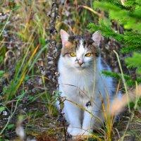 Желтоглазая охотница :: Miola