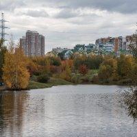 Парк в Митино. :: Владимир Безбородов