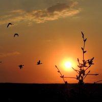 Восход Солнца :: Роман Савоцкий