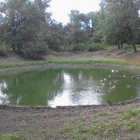 Круглое озеро :: Татьяна