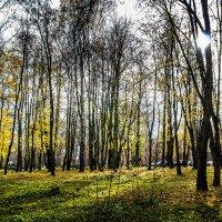 Осенний этюд с солнцем. :: Владимир Буравкин