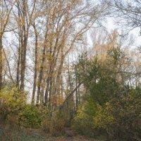 Дорога в лес :: Ирина