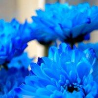 Голубые георгины :: Наталья (ShadeNataly) Мельник