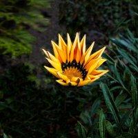 Гацания до сих пор цветёт :: Евгений