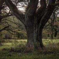 Мистические деревья :: Лада