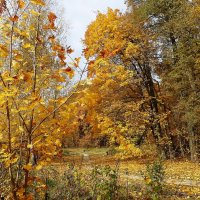 Осень :: Лидия Бусурина