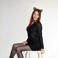 Miss cats :: Светлана Громова