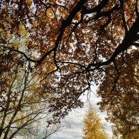 Осень :: Бобылев Геннадий