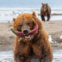 Рыба до ушей :: Денис Будьков