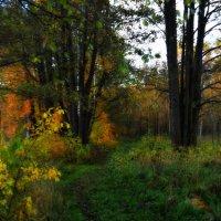 А лес стоит загадочный :: Татьяна Помогалова