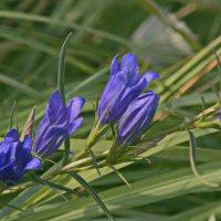 Лесной цветок. :: сергей