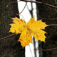 Подует ветер и улетит кленовый лист! :: Милешкин Владимир Алексеевич
