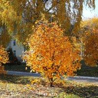 Осенни солнечный день :: Надежд@ Шавенкова