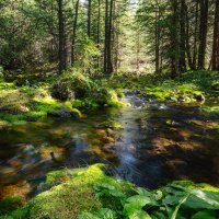 В сказочном лесу :: Валентина Кобзева