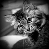 Усатость редкой красоты! :: A. SMIRNOV