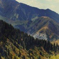 Завораживающие скалы :: Evelina Tyutneva