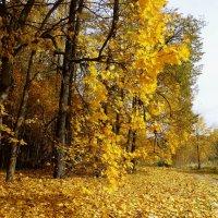Осенний пейзаж :: Лидия Бусурина