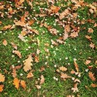 Натуральный ковёр ... :: Лариса Корж