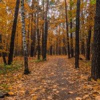 В осеннем лесу :: Владимир Брагилевский