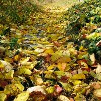 Золотая дорожка октября... :: Михаил Болдырев