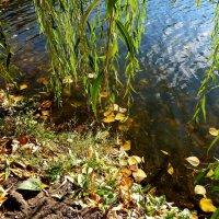 Косы ивы над водой... :: Лидия Бараблина