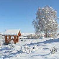 Первый снег. :: Viacheslav Birukov