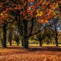 Каштановая осень :: Alexander Andronik