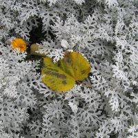 октябрь :: Елена Шаламова